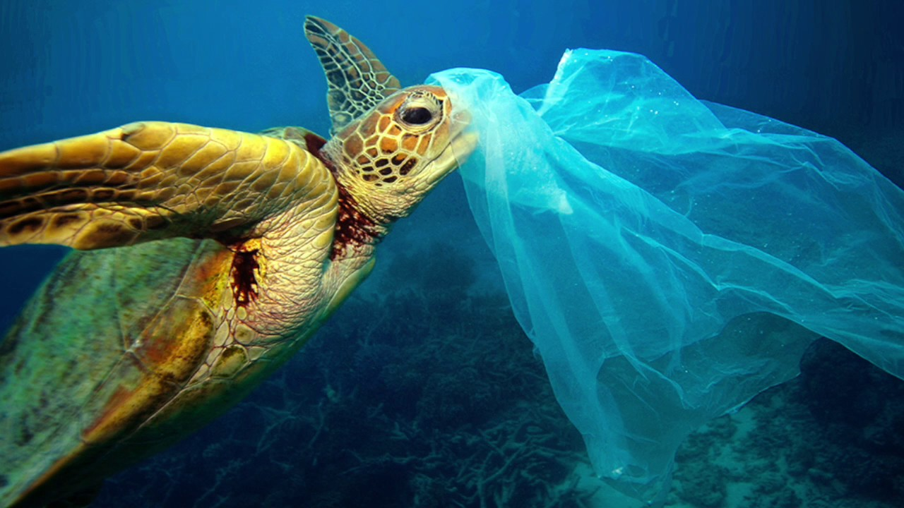 sea turtles and plastic
