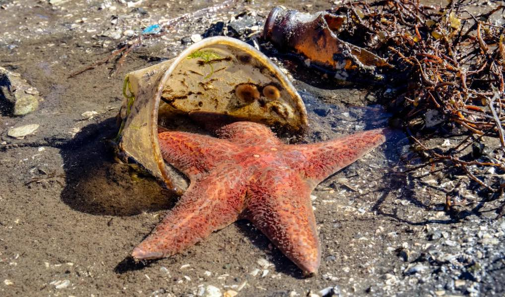 starfish-plastic