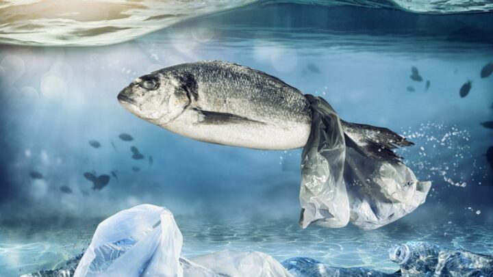 ocean-plastic-kills-fish