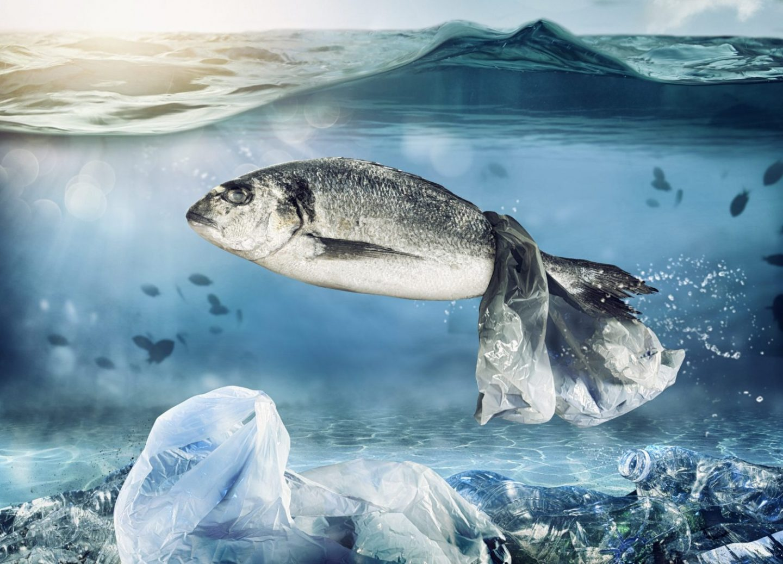 ocean-plastic-kills-fish